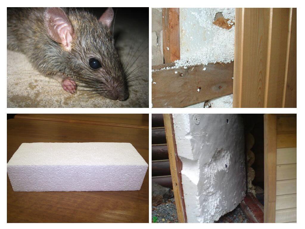 пенопласт и мыши